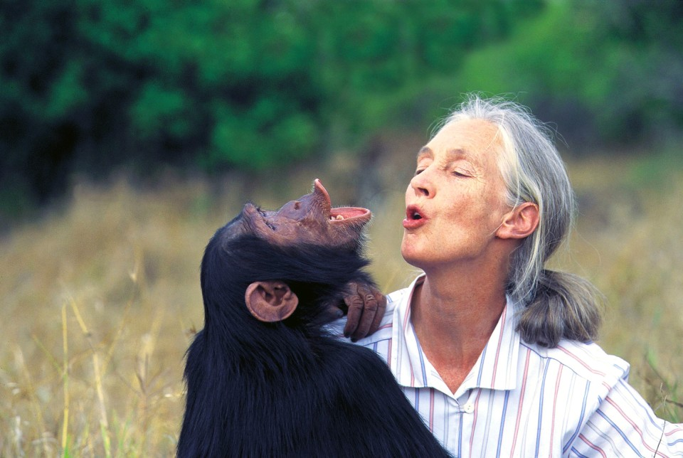 JANE_GOODHALL_CHIMPANZEE