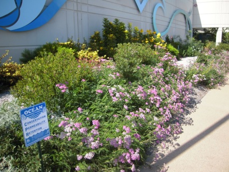 Ocean Friendly Garden 2